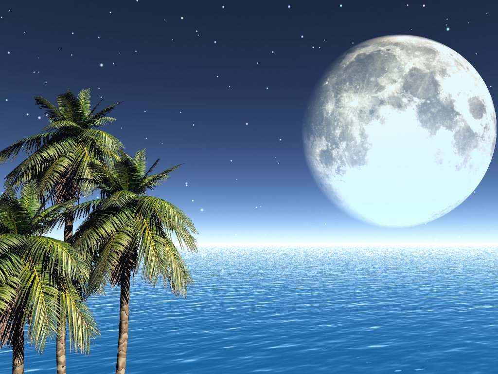 Moonlight palms1